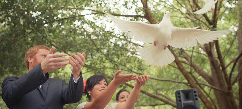 White Doves of Noosa