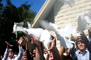 White Doves of Noosa - Special Occasions